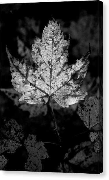 Maple Leaf In Black And White Canvas Print