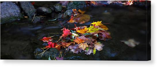 Maple Leaves-0001 Canvas Print by Sean Shaw