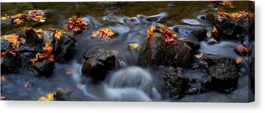 Maple Leaves-0003 Canvas Print by Sean Shaw