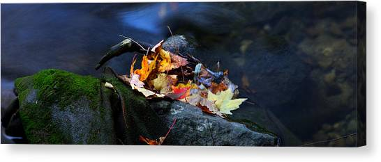 Maple Leaves-0004 Canvas Print by Sean Shaw