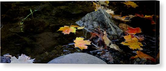 Maple Leaves-0006 Canvas Print by Sean Shaw