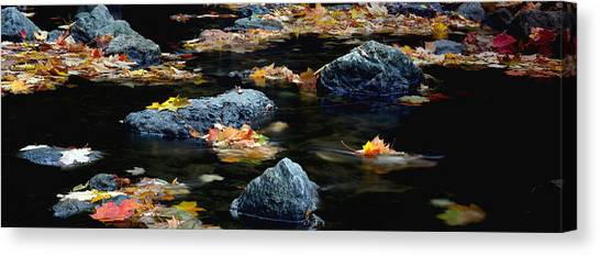 Maple Leaves-0008 Canvas Print by Sean Shaw