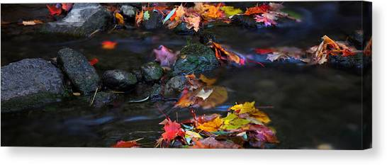 Maple Leaves-0009 Canvas Print by Sean Shaw