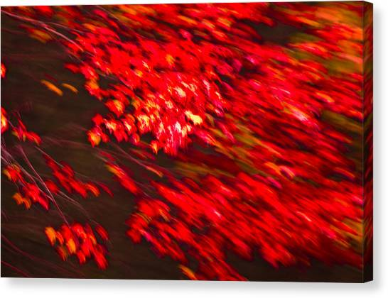 Maple Red Abstract Canvas Print