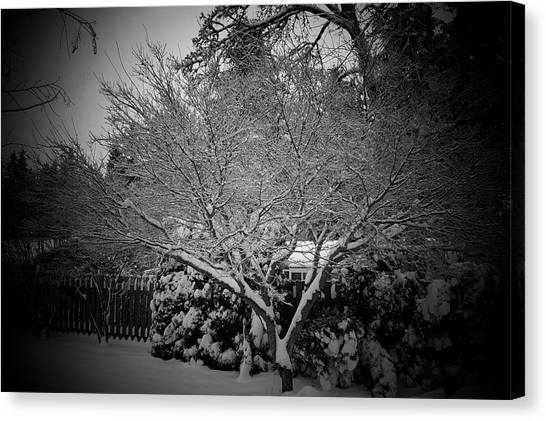 Maple Snow Canvas Print by Garry Kaylor