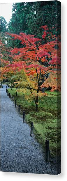 Post Falls Canvas Print - Maple Tree At The Roadside, Sanzen-in by Panoramic Images