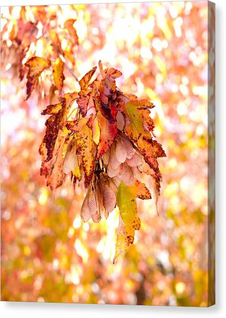 Canvas Print featuring the photograph Maple Tree In Autumn by Dutch Bieber