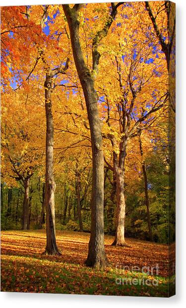 Canvas Print featuring the photograph Maple Treo by Scott Kemper