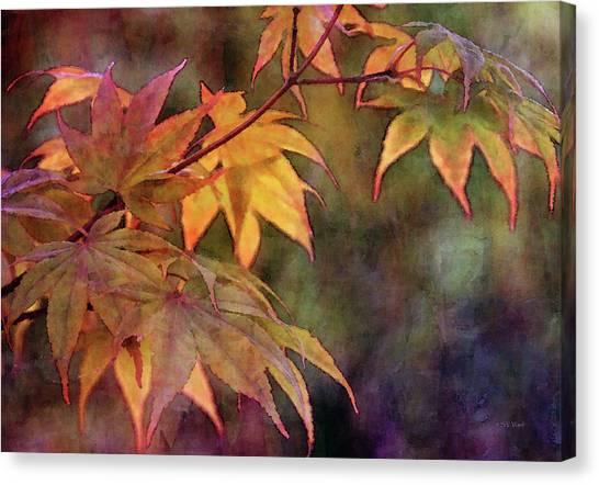 Maples Golden Glow 5582 Idp_2 Canvas Print