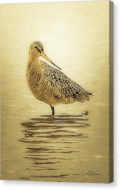 Marbled Godwit - Backward Glance Canvas Print