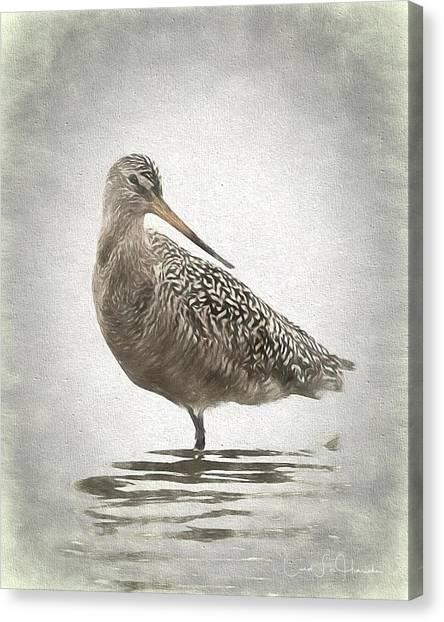 Marbled Godwit Canvas Print