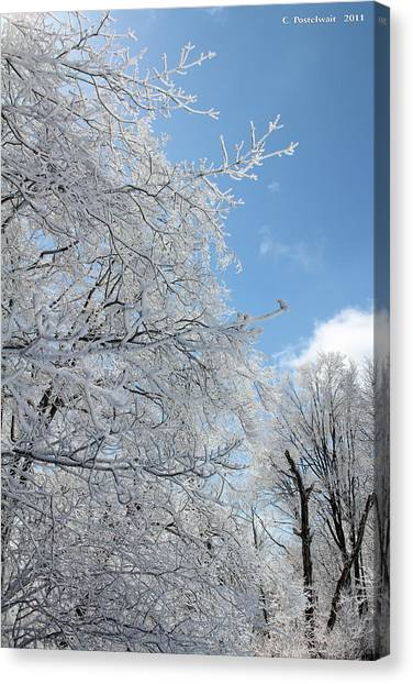 March Winters  Canvas Print by Carolyn Postelwait