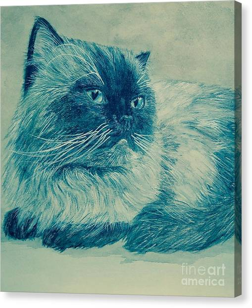 Himalayan Cats Canvas Print - Marchessa Blue by Adriana Giubergia