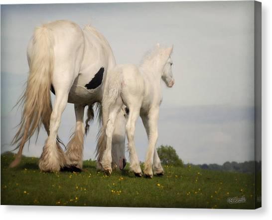 Mare And Foal Canvas Print by Elizabeth Sescilla