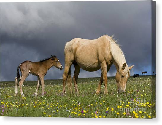 Palomino Foal Canvas Print - Mare And Her Foal by Jean-Louis Klein & Marie-Luce Hubert