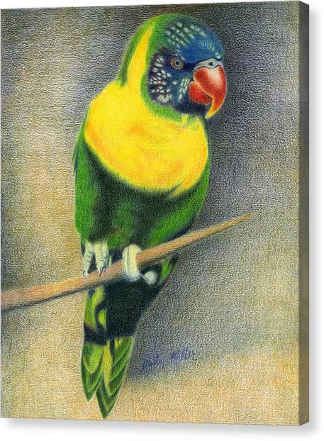Marigold Lorikeet Canvas Print