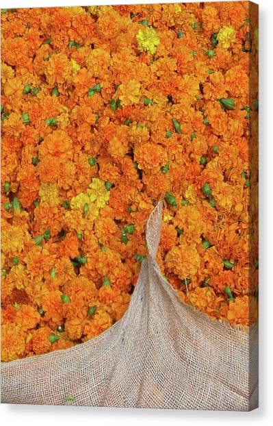 Marigolds II Canvas Print by David L Griffin