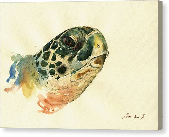 Turtles Canvas Print - Marine Turtle by Juan  Bosco