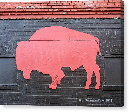 Maris' Bison Canvas Print