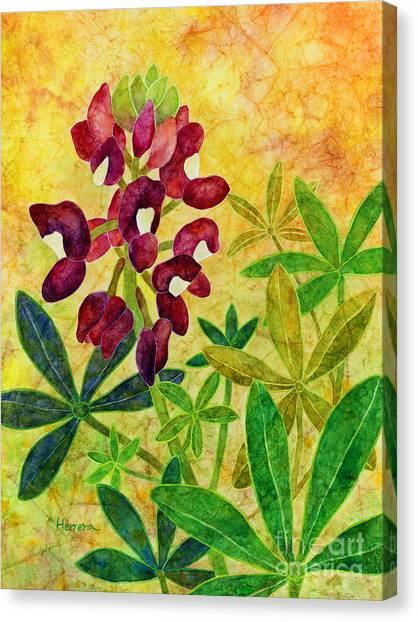 M.a Canvas Print - Maroon Bluebonnet by Hailey E Herrera