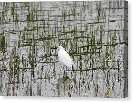 Marsh Bird 1 Canvas Print