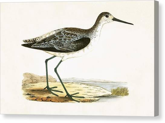 Sandpipers Canvas Print - Marsh Sandpiper by English School