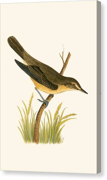 Warblers Canvas Print - Marsh Warbler by English School