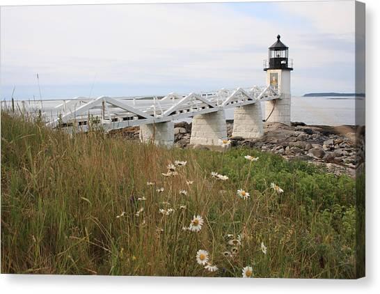 Marshall Point Daisies Canvas Print