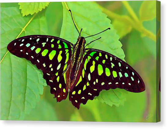 Marvelous Malachite Butterfly 2 Canvas Print