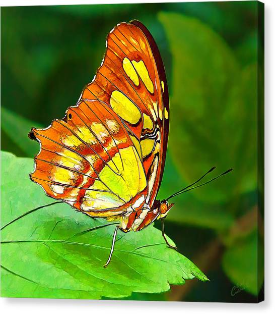 Marvelous Malachite Butterfly Canvas Print