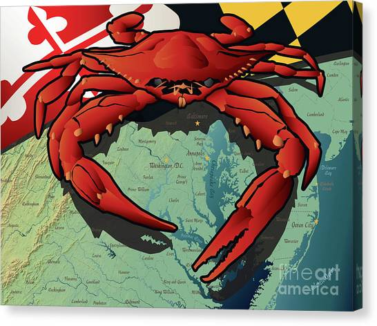 Maryland Red Crab Canvas Print