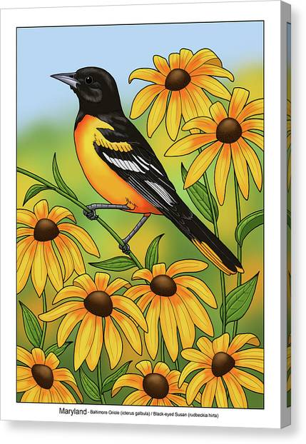 Baltimore Orioles Canvas Print - Maryland State Bird Oriole And Daisy Flower by Crista Forest