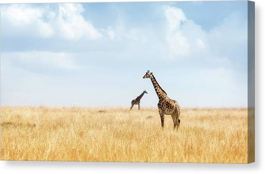 African Canvas Print - Masai Giraffe In Kenya Plains by Susan Schmitz