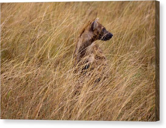 Masai Mara Hyena Canvas Print by Paco Feria