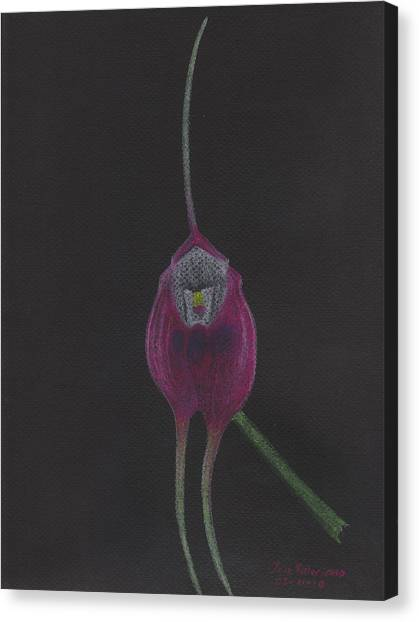 Masdevallia Infracta Orchid Canvas Print
