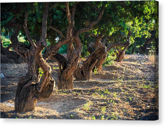 The Acropolis Canvas Print - Mastic Tree   by Emmanuel Panagiotakis