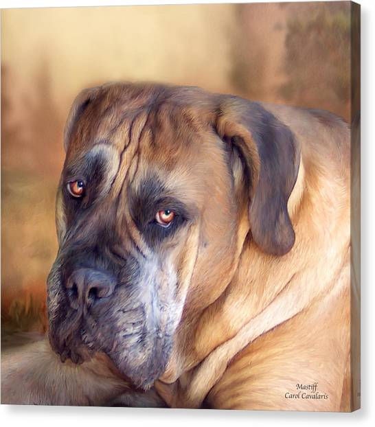 Mastiffs Canvas Print - Mastiff Portrait by Carol Cavalaris