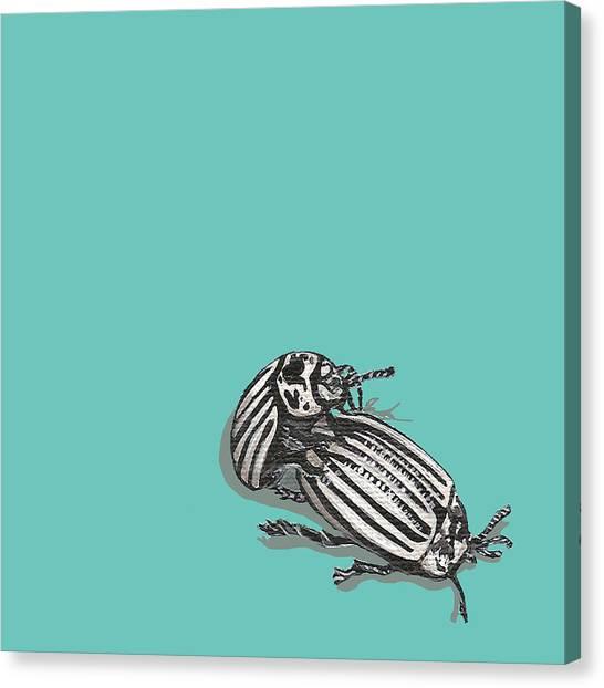 Mating Beetles Canvas Print