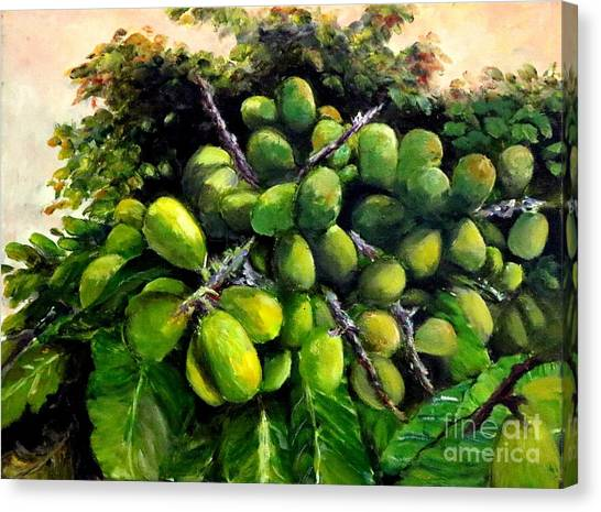 Matoa Fruit Canvas Print