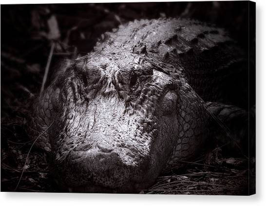 University Of Florida Canvas Print - Matriarch by Mark Andrew Thomas