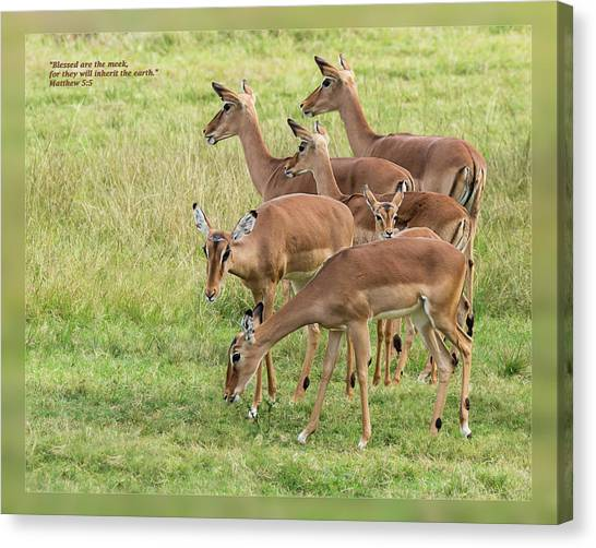Canvas Print featuring the photograph Matthew 5 5 by Dawn Currie