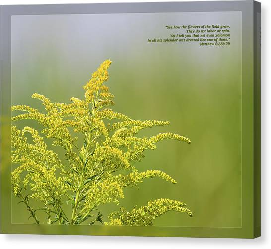 Canvas Print featuring the photograph Matthew 6 28b-29 by Dawn Currie