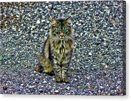 Main Coons Canvas Print - Mattie The Main Coon Cat by Gina O'Brien