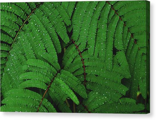 Maui Forest Canvas Print