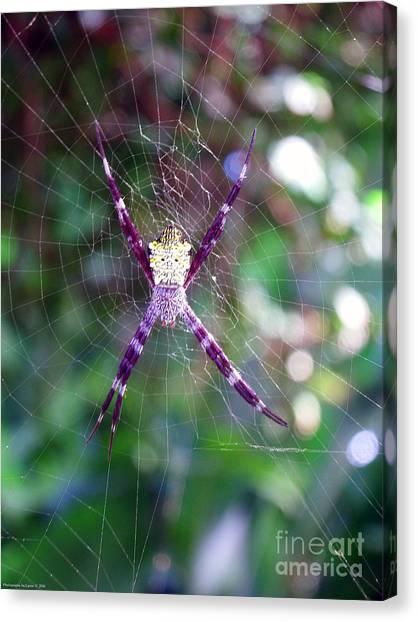 Maui Orbweaver/garden Spider Canvas Print