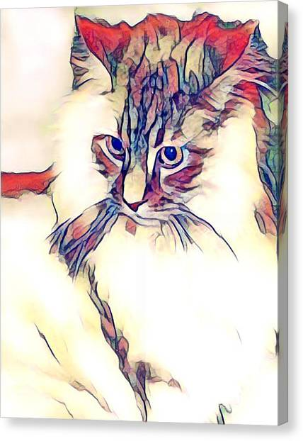 Max The Cat Canvas Print