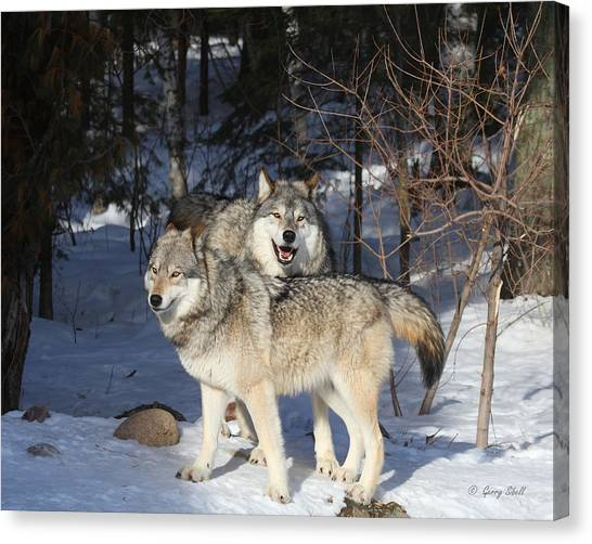 Maya And Grizzer Canvas Print