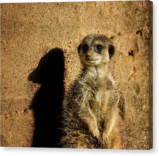 Meerkats Canvas Print - Me And My Shadow by Martin Newman