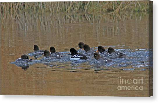 Canvas Print - Me And The Girls by Gary Wing