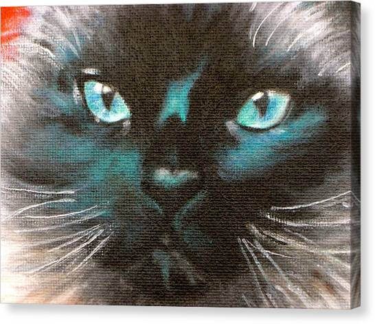 Himalayan Cats Canvas Print - Turquoise Blue Eyes by Judith Killgore